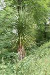 Unusual Tree !
