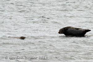 Otter4